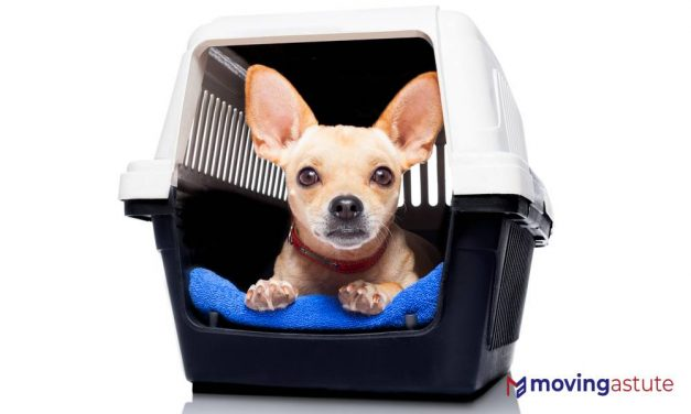 6 Best Pet Shipping Companies of 2021