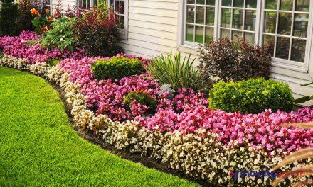 How to Start a Flower Garden?
