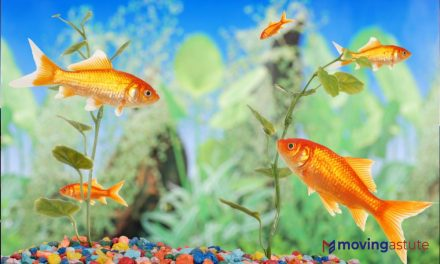 Steps to Safely Moving a Fish Tank
